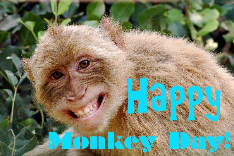 happymonkeyday