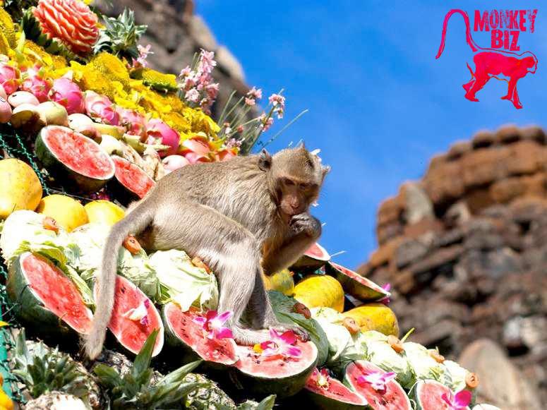 monkeyfestival